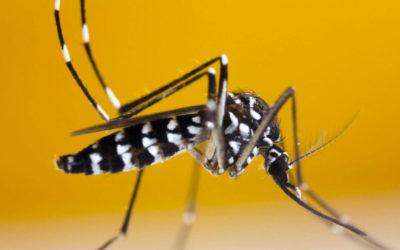 Disinfestazione Adulticida: Prevenzione contro le Zanzare