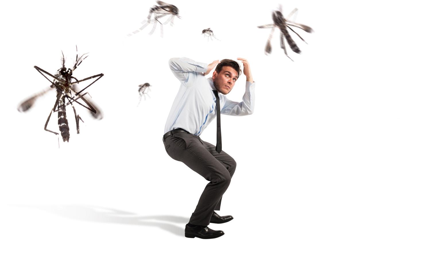 attacco zanzare insetti blatte disinfestazione derattizzazione
